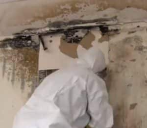 mold remediation professional removing black mold